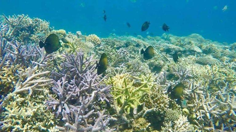 Tour, Camping And Snorkeling Gili Kondo Island